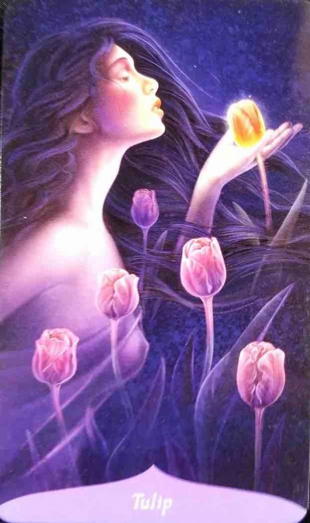 carte tulipe de l'oracle de la magie des fleurs